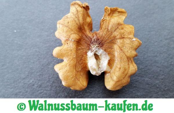 Zusammensetzung der Walnuss Frucht