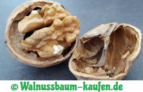 Walnuss mit Schale